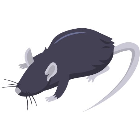 Piège à rat, solutions anti rat, traitement rats