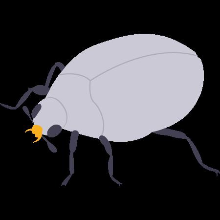 Prestation anti-mites / anti-anthrènes de tapis professionnelle