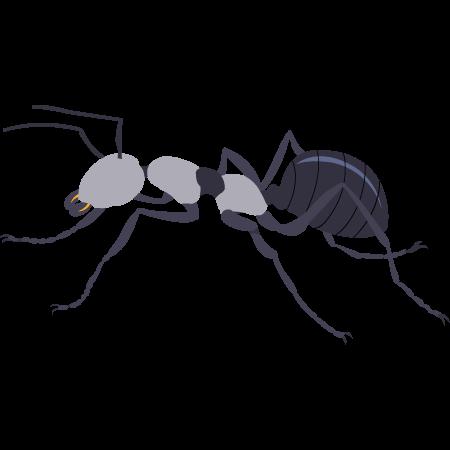Traitement anti-fourmis