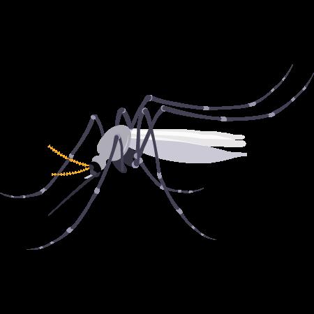 Traitement anti-moustique, solutions anti-moustiques