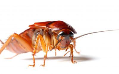 Combien coûte une intervention anti-blattes ?